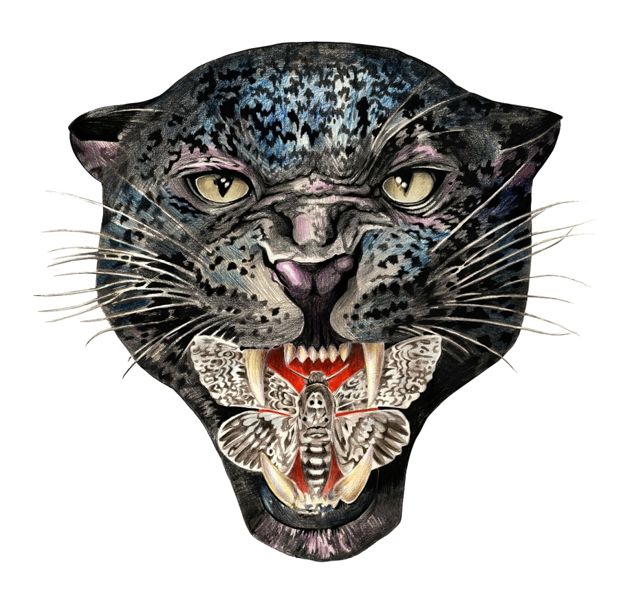 leopard_moth_web